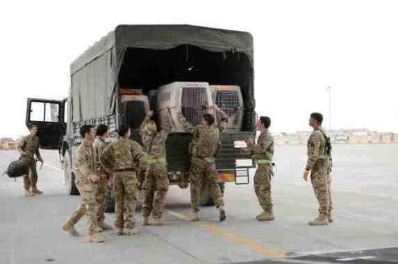 Read related blog: https://britisharmyblog.wordpress.com/2013/04/16/herrick-18-stories-military-dogs-homeward-bound/